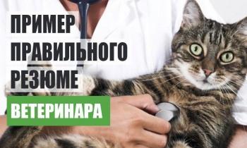 Образец правильного резюме врача ветеринара