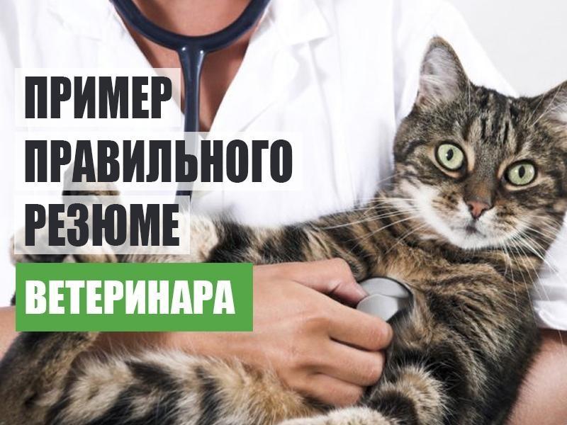 резюме ветеринарного врача